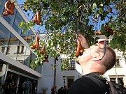 Klobásky na stromech a čepované pivo přímo z kašny čekalo ve středu na náměstí brněnské Staré Radnice na Brňany při oficiálním otevření kryté tržnice na Zelném trhu.