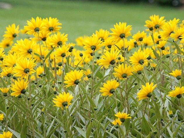 Pro květiny už také začíná podzim jejich života.