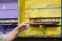 Zkušenému včelaři Václavu K. z Medlova na Židlochovicku někdo jedem postříkal úly, které stojí poblíž lesa.