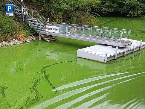 Zelená voda Brněnské přehrady.