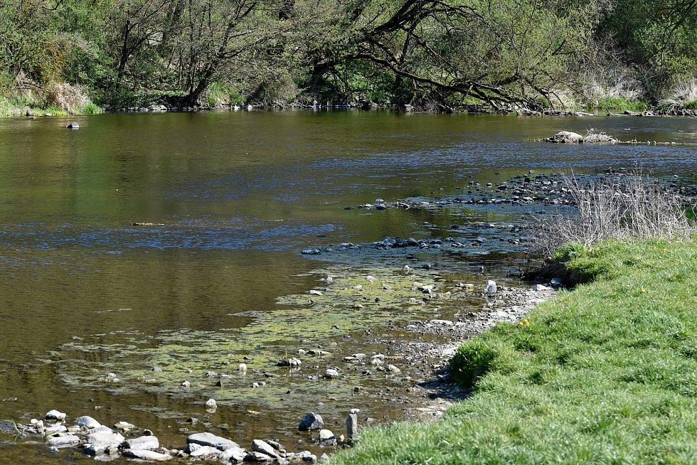 Řeka Jihlava pod zříceninou hradu Templštejn a Biskoupkami.