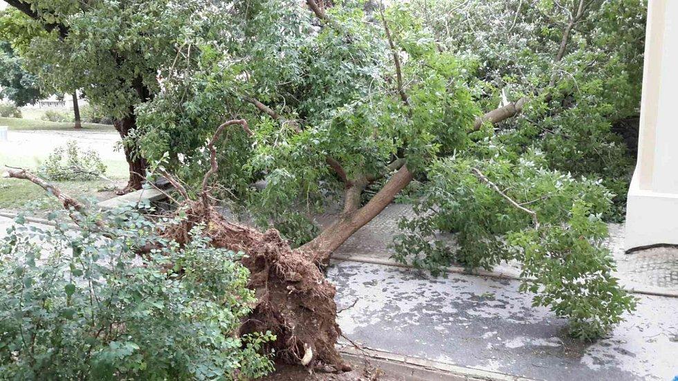 Popadané stromy v Rolnické ulici v Brně. Téměř dvě desítky výjezdů hasičů si vyžádaly páteční bouřky v Jihomoravském kraji.