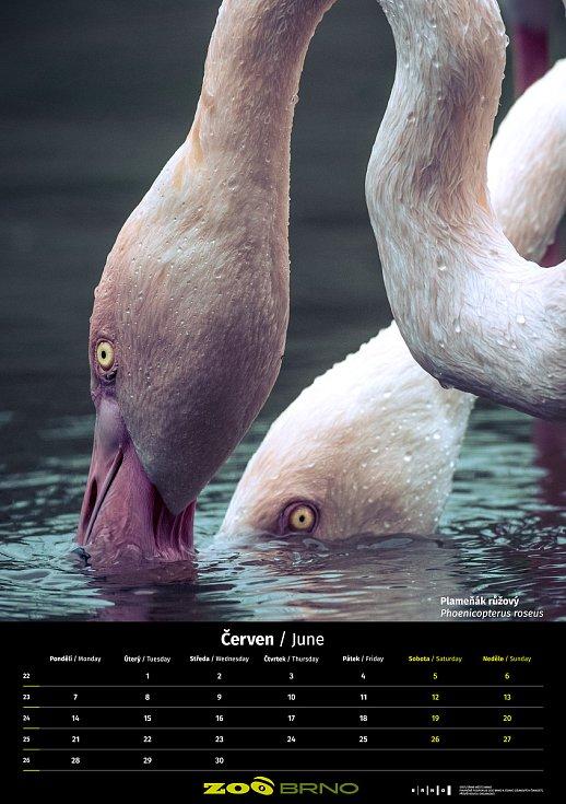Kalendář Zoo Brno pro rok 2021 je tentokrát neprodejný. Foto: Zoo Brno