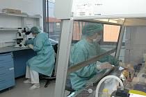 Babákův výzkumný institut sdruží šedesát pracovníků.