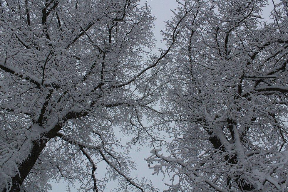 Olešnice a blízké okolí se zahalilo do bílého - leden 2020.