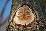 V Hrabalově parku se objevily na stromech vyřezané hlavy sov.