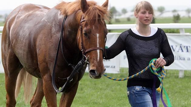 Vítězný kůň Noble Fox.