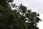 Bouřky v kraji strhávaly střechy a lámaly stromy.