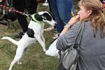 V brněnském parku Lužánky se konala umisťovací výstava psů z útulků.