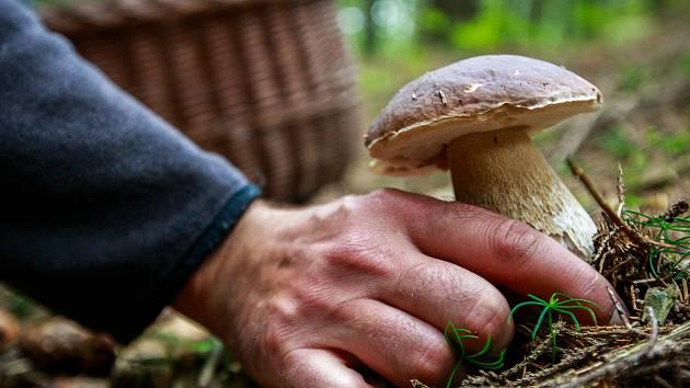 Kam na Vysočině za houbami? Do vysokých kopců i po kolenou do smrčí