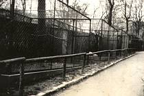 Zookoutek v Tyršových sadech otevřel v roce 1937 Spolek pro zřízení zoo.