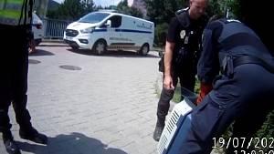 Zoufalé kachně pomohli v pondělí v brněnském Komíně strážníci.