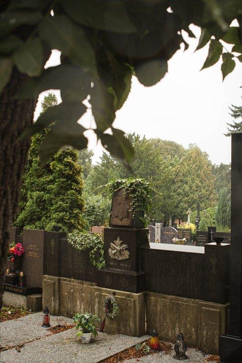 Jsou součástí ústředního hřbitova už od druhé poloviny 19. století. Za tu dobu zmohutněly. Správa hřbitovů chce sto stromů vykácet a místo nich vysadit jiné. Jasany jsou však podle některých úplně zdravé.