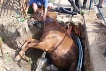 Hasiči zachraňovali koně, který spadl do výkopu.