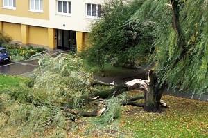 Zlomený strom v Brně u domu v Bieblově ulici 22.
