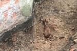 Na neznámý předmět v hloubce asi 1,5 metru narazili dělníci v pondělí dopoledne při výkopových pracích u brněnského Petrova.