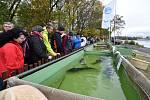 Stovky lidí se přišly podívat na tradiční výlov největšího rybníka na Pohořelicku Vrkoče.