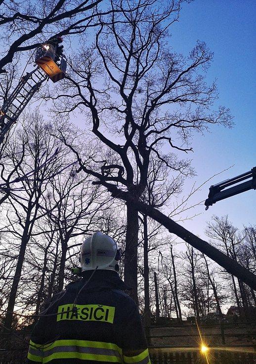 Hasiči v brněnské zoo odstranili spadlý strom na cestě u jaků a bizonů.