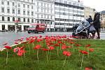 Vlčí máky, symbol Dne válečných veteránů na brněnském náměstí Svobody.