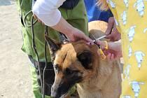 Lidé bez domova dostali v Brně pro své psy nové obojky proti klíšťatům.