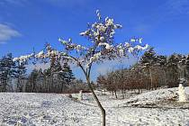 Zimní procházka na Kamenném vrchu. Foto: Oldřiška Wolfová