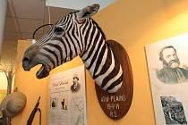 Moravské zemské muzeum v Brně zahájilo novou interaktivní výstavu, která návštěvníky provede napříč africkým kontinentem.