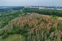 Dřevorubci od pondělí kácí uschlé borovice a modříny v přírodní rezervaci Kamenný vrch.