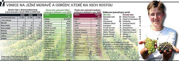 Vinice na jižní Moravě a odrůdy, které na nich rostou.