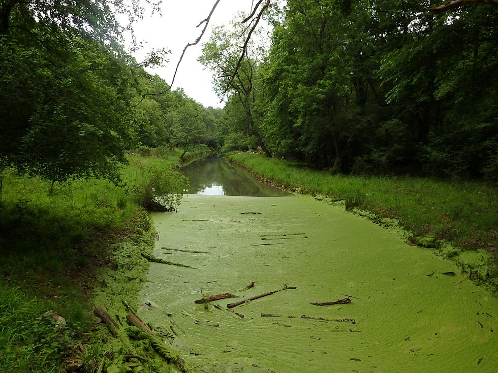 Tůně, vodní kanály a slepá ramena lužních lesů v oboře Soutok se po silném dešti minulý týden naplnily vodou.