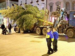 Náměstí Svobody má vánoční strom. Před spadnutím ho chrání dřevěné hranoly.