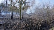 Požár lesa v Oslavanech. Zaslal čtenář.