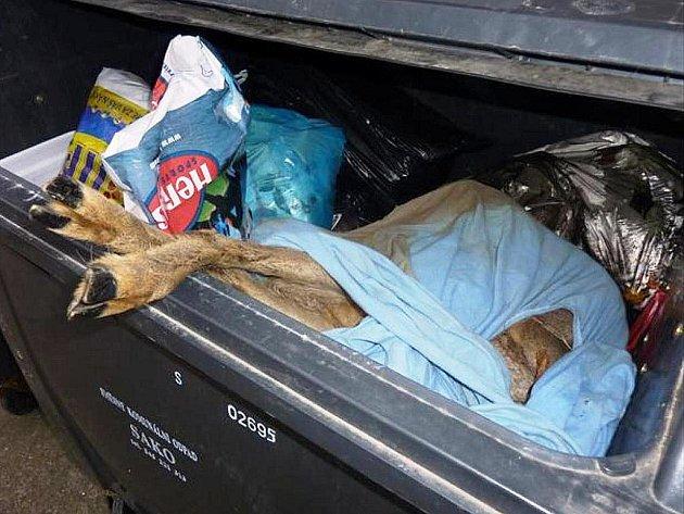 Mrtvou srnku pohozenou v kontejneru našel v pondělí ráno jeden z obyvatel domu v ulici Kamínky v brněnském Novém Lískovci.
