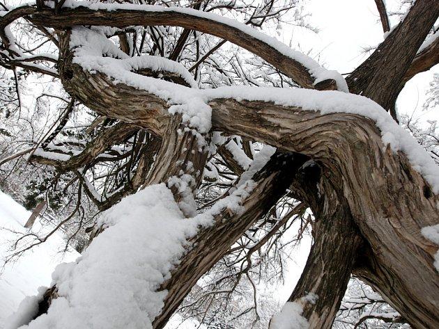 Zima v Brně - ilustrační fotografie.