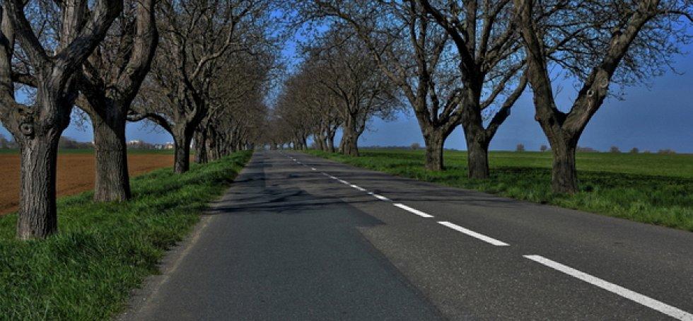 Ořešáková alej Strážnice - Žeraviny. Ořešák vlašský tvoří alej stromů u silnice nedaleko Strážnice