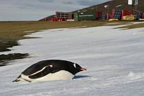 Vědecká pozorování, sběr vzorků i prozkoumávání stavu polární stanice. Nejen to jsou úkoly vědců z expedic Masarykovy univerzity v Antarktidě.