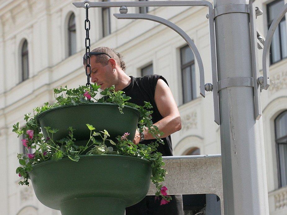 I kvůli prezidentské návštěvě se na brněnské náměstí Svobody dodává trochu zeleně - alespoň v květináčích.