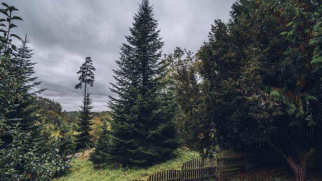 Brno jedli získá tradičně z lesů Školního lesního podniku Křtiny Mendelovy univerzity v Brně.