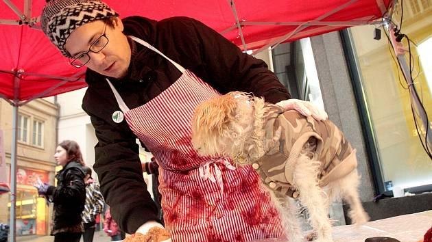 Aktivisté v centru Brna postavili stánek s prodejem vánočních psů. Protestovali tím proti krutému zacházení s kapry.
