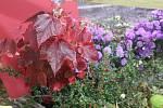 Jak se na podzim vybarví příroda mohou pozorovat návštěvníci výstavy Barvy podzimu v Botanické zahradě a arboretu Mendelovy univerzity v Brně