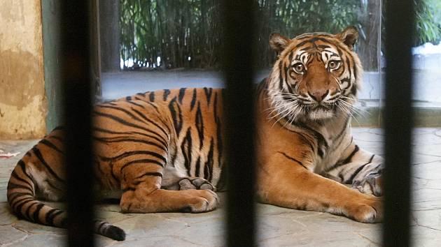 Zázemí pavilonu tygrů představuje další díl seriálu Brněnského deníku Rovnost nazvaný Za zavřenými dveřmi, který ukazuje lidem běžně nepřístupná místa.