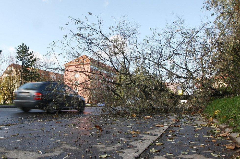 Spadlý strom v ulici Bělohorská v Brně-Juliánově.