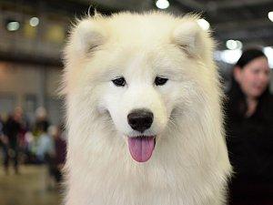 Výstava psů: někteří návštěvníci si přijeli vybrat nového mazlíčka