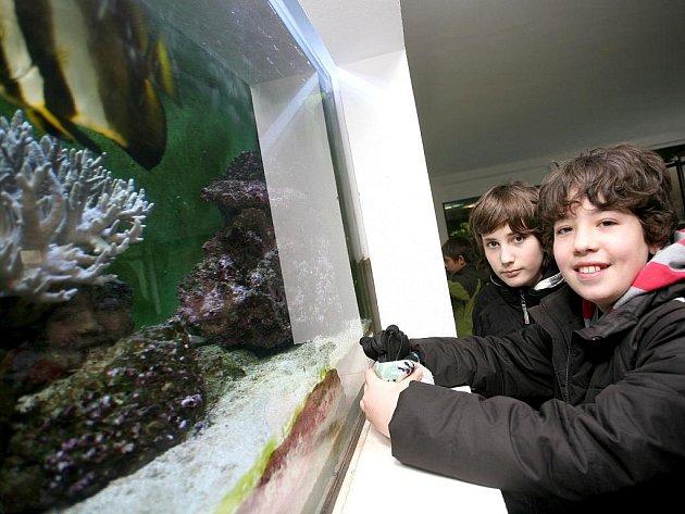 Celodenní program pro děti připravila brněnská zoo.