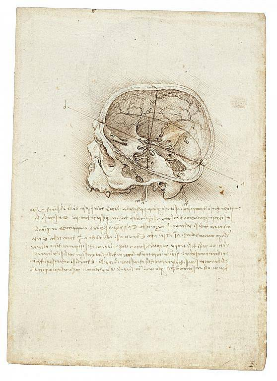 Kresba Leonada da Vinciho.