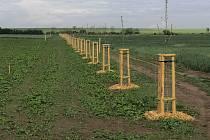 Ve Vranovicích vysadili za poslední dobu 334 stromů a 555 keřů.