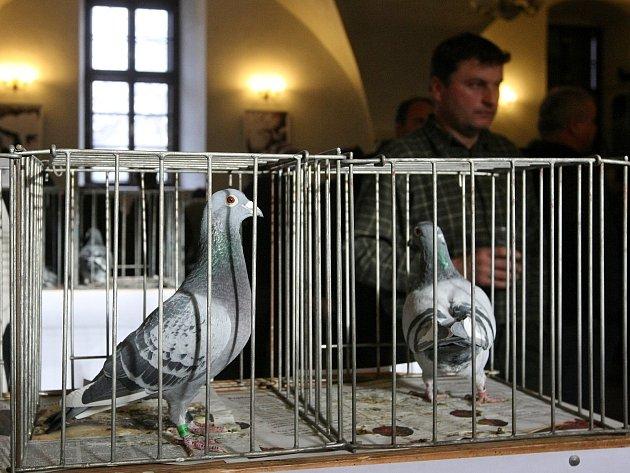 Výstava poštovních holubů v Rosicích.