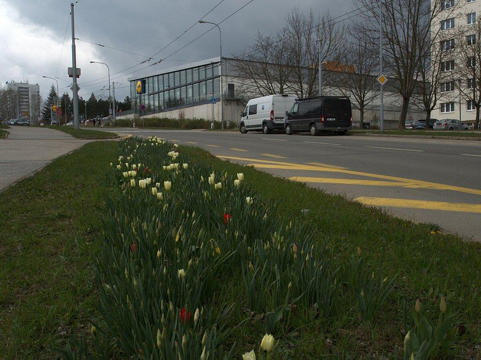 Procházka brněnským Starým Lískovcem zavede pozorného výletníka i do uliček, které vyhlížejí venkovsky. Nouze není ani o kytky v plném květu.