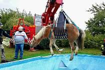 Hasiči ve Vysokých Popovicích na Brněnsku zachraňovali koně, který spadl do zahradního bazénu. Zvíře v ledové vodě trpělo osmdesát minut.