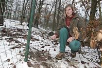 Za poslední rok už toulaví psi v zoo zadávili deset zvířat. Zabránit jejich vniknutí do zahrady má nový plot. Tomu současnému totiž úplně chybí zábrany proti podhrabání.