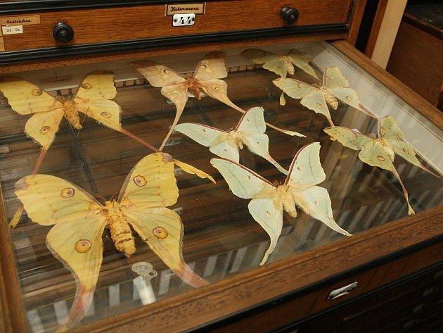Ve sbírkách entomologického oddělení jsou přes dva miliony exemplářů.